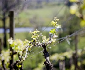 Norton Estate Wines - Accommodation Coffs Harbour