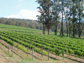 Piedmont Vineyard - Accommodation Coffs Harbour