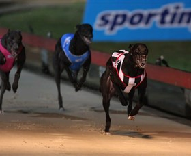 Dapto Dogs - Accommodation Coffs Harbour