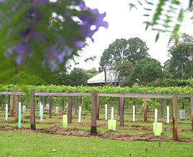 Douglas Vale Historic Homestead  Vineyard - Accommodation Coffs Harbour