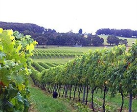 Banjo's Run Winery and Vineyard - Accommodation Coffs Harbour
