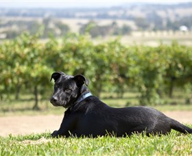 Moothi Estate Vineyard and Cellar Door - Accommodation Coffs Harbour