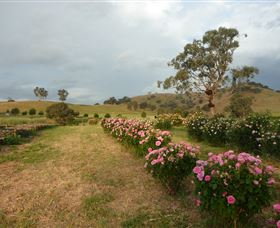 Damasque Rose Oil Farm - Accommodation Coffs Harbour
