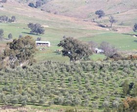 Wymah Organic Olives and Lambs - Accommodation Coffs Harbour