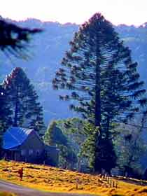 Bunya Mountains National Park - Accommodation Coffs Harbour