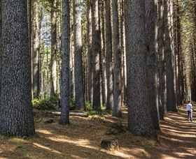 Sugarpine Walk - Accommodation Coffs Harbour