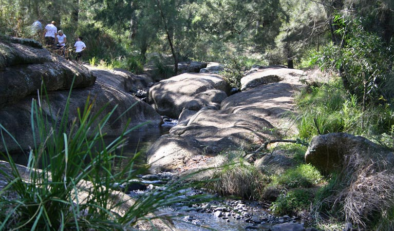 Towarri National Park - Accommodation Coffs Harbour