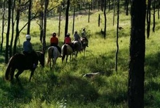 Hunter Valley Horse Riding and Adventures - Accommodation Coffs Harbour