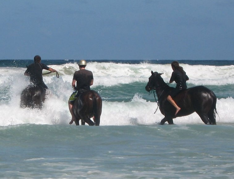 Pegasus Park Equestrian Centre - Accommodation Coffs Harbour