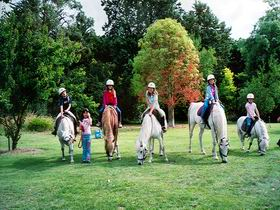 Limestone Coast Horseriding - Accommodation Coffs Harbour