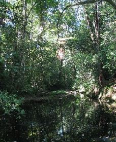 Wabunga Wayemba Charmillan Creek walking track - Accommodation Coffs Harbour