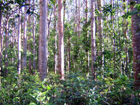 Cathu State Forest - Accommodation Coffs Harbour