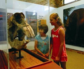Australian Museum Diprotodon Exhibition - Accommodation Coffs Harbour