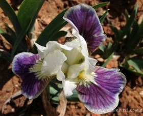 Sunshine Iris Nursery - Accommodation Coffs Harbour