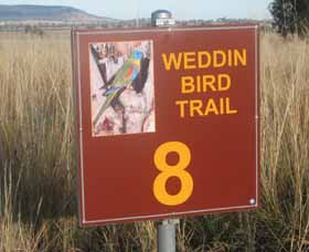 Weddin Bird Trails