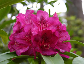 Campbell Rhododendron Gardens - Accommodation Coffs Harbour