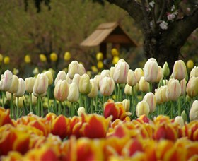 Tulip Top Gardens - Accommodation Coffs Harbour