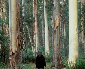 Blue Gum Forest - Accommodation Coffs Harbour