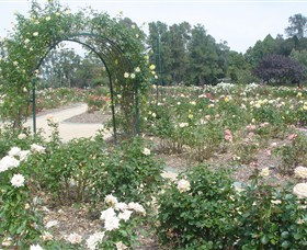 Victoria Park Rose Garden - Accommodation Coffs Harbour