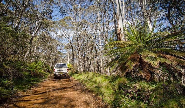 Barrington trail - Accommodation Coffs Harbour