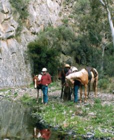 Yarramba Horse Riding - Accommodation Coffs Harbour