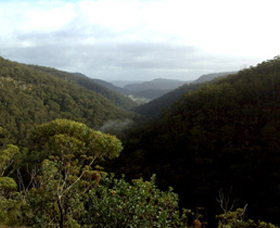 Nattai Gorge Lookout - Accommodation Coffs Harbour