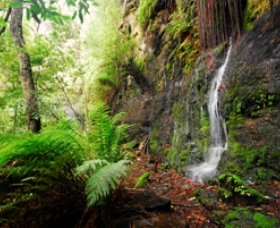 Fairy Bower Falls - Accommodation Coffs Harbour
