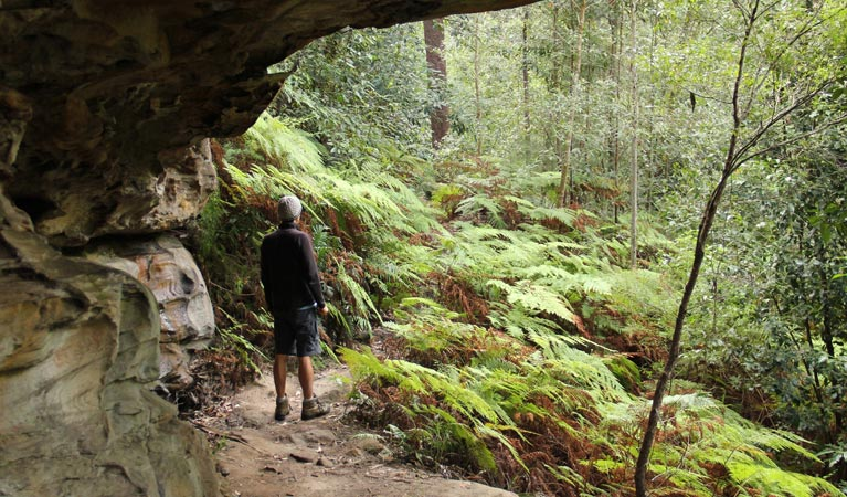 Dharug National Park - Accommodation Coffs Harbour