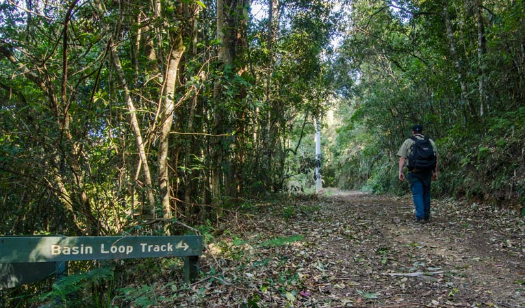 Basin Loop track - Accommodation Coffs Harbour