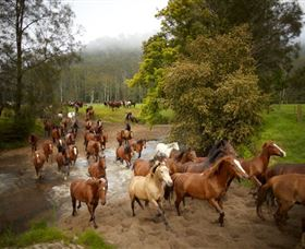 Glenworth Valley Horse Riding - Accommodation Coffs Harbour