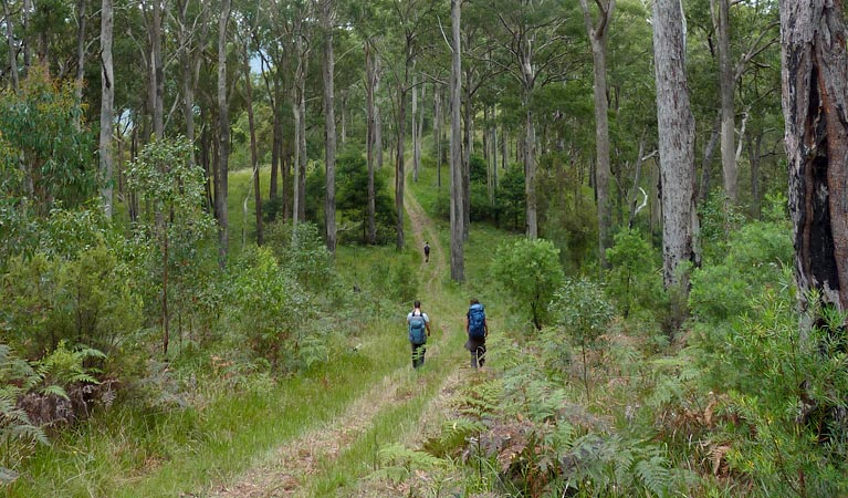 The Green Gully track - Accommodation Coffs Harbour