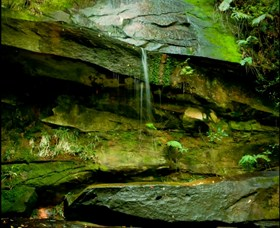 Strickland State Forest - Accommodation Coffs Harbour