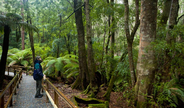 Monga National Park - Accommodation Coffs Harbour