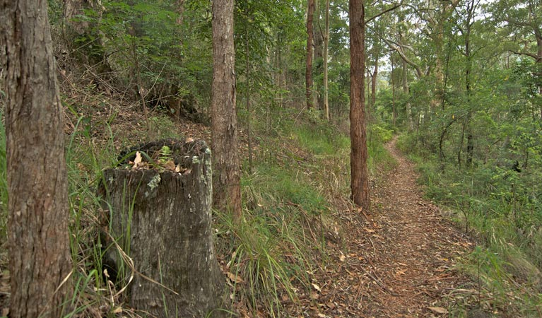 Border loop walk - Accommodation Coffs Harbour