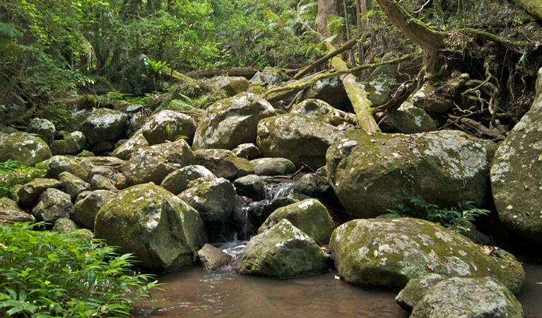 Booyong walking track - Accommodation Coffs Harbour
