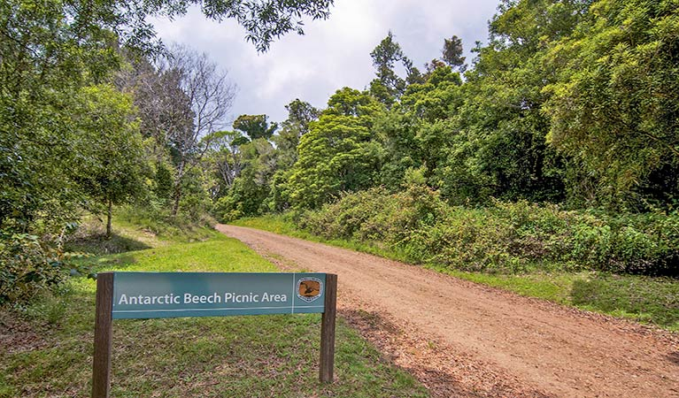 Antarctic Beech picnic area - Accommodation Coffs Harbour