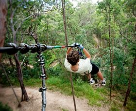 TreeTop Challenge - Accommodation Coffs Harbour