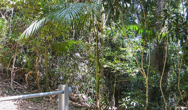 Goorgana walking track - Accommodation Coffs Harbour