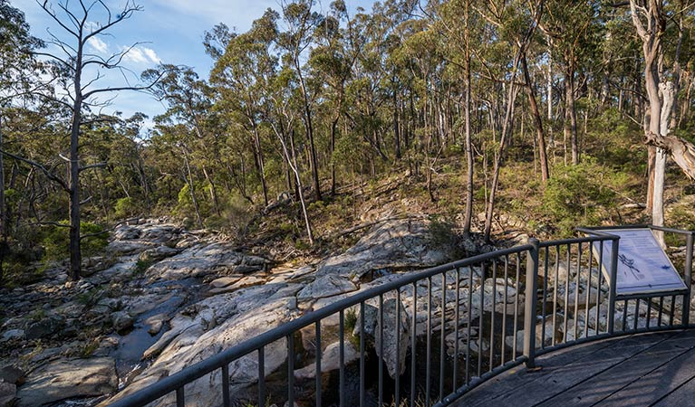 Myanba Gorge walking track - Accommodation Coffs Harbour