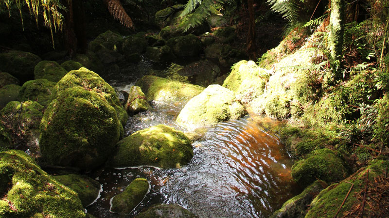 South East Forests National Park - Accommodation Coffs Harbour