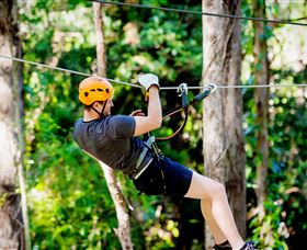 TreeTop Challenge Currumbin - Accommodation Coffs Harbour