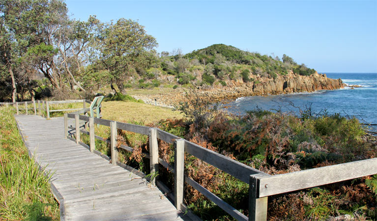 Mimosa Rocks walking track - Accommodation Coffs Harbour