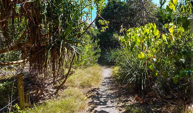 North Head walking track - Accommodation Coffs Harbour