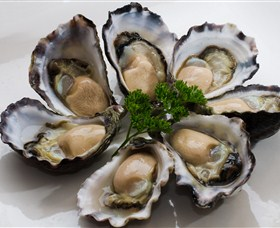 Tathra Oysters - Accommodation Coffs Harbour