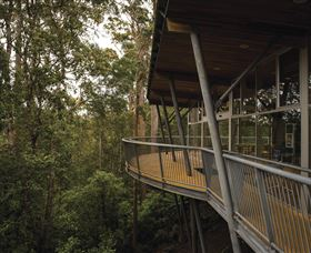 Tarkine Forest Adventures - Dismal Swamp - Accommodation Coffs Harbour