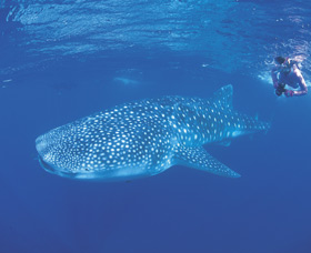 Ningaloo Reef - Accommodation Coffs Harbour
