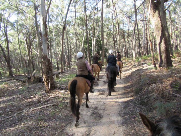 Silver Brumby Trails - Accommodation Coffs Harbour