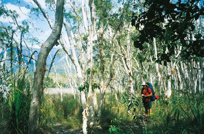 Thorsborne Trail Hinchinbrook Island National Park - Accommodation Coffs Harbour
