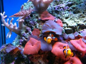 Tropical Marine Centre - Accommodation Coffs Harbour