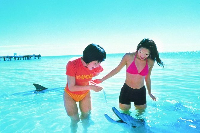 Monkey Mia Dolphins  Shark Bay Air Tour From Perth - Accommodation Coffs Harbour